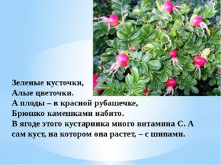 Зеленые кусточки, Алые цветочки. А плоды – в красной рубашечке, Брюшко камешк