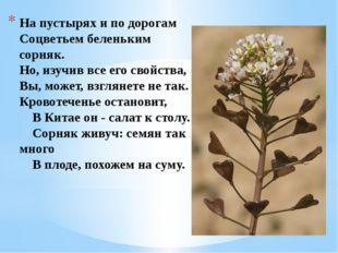На пустырях и по дорогам Соцветьем беленьким сорняк. Но, изучив все его свойс