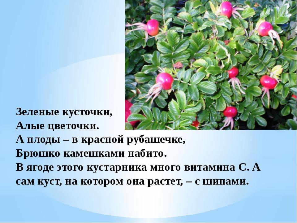 Зеленые кусточки, Алые цветочки. А плоды – в красной рубашечке, Брюшко камешк...