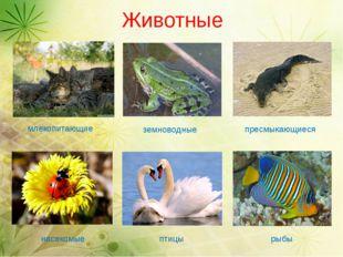 Животные млекопитающие насекомые пресмыкающиеся земноводные птицы рыбы
