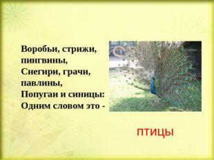 птицы Воробьи, стрижи, пингвины, Снегири, грачи, павлины, Попугаи и синицы: