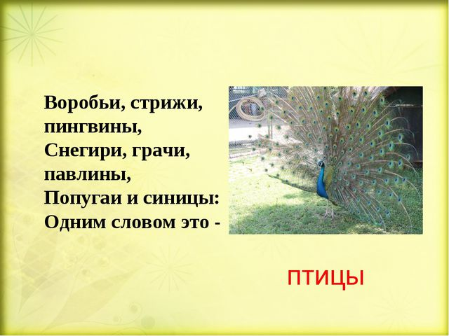 птицы Воробьи, стрижи, пингвины, Снегири, грачи, павлины, Попугаи и синицы:...