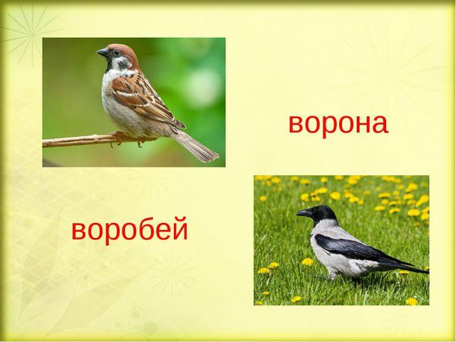 воробей ворона
