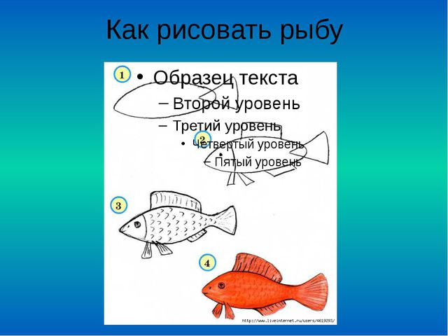 Как рисовать рыбу