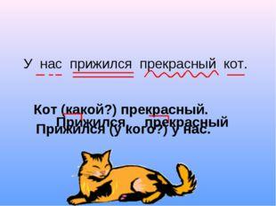 У нас прижился прекрасный кот. Кот (какой?) прекрасный. Прижился (у кого?) у