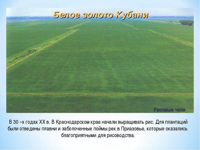 В 30 –х годах XX в. В Краснодарском крае начали выращивать рис. Для плантаций...