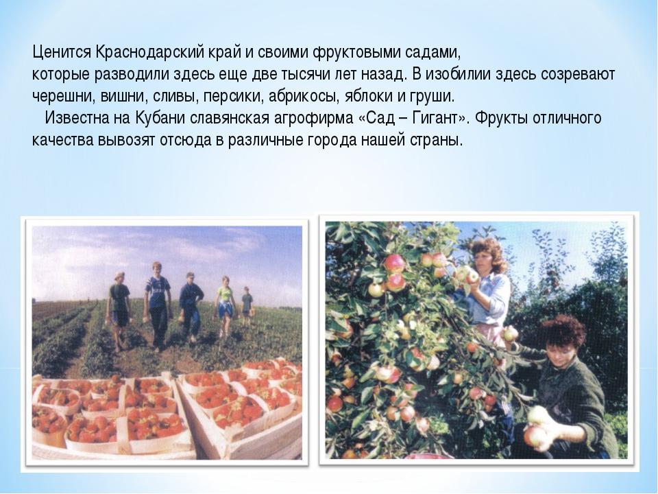 Ценится Краснодарский край и своими фруктовыми садами, которые разводили здес...