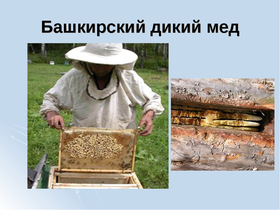 Башкирский дикий мед