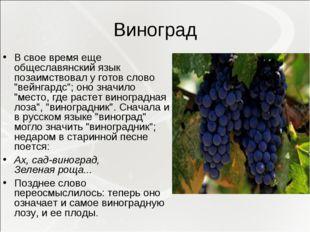 """Виноград В свое время еще общеславянский язык позаимствовал у готов слово """"ве"""