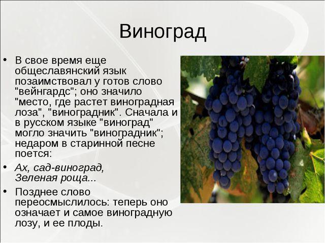"""Виноград В свое время еще общеславянский язык позаимствовал у готов слово """"ве..."""