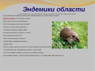 Эндемики области Эндемики, илиэнде́мы— биологическиетаксоны, представител