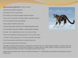 Дымчатый леопард(лат.Neofelis nebulosa)- представитель семействакошачьих,