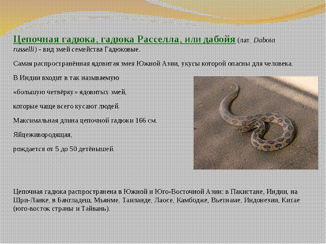 Цепочная гадюка,гадюка Расселла, илидабойя(лат.Daboia russelli)- вид зм...
