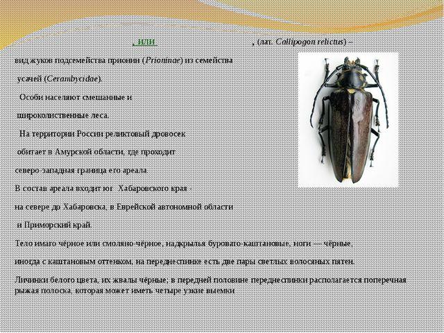 Рели́ктовый дровосе́к, илирели́ктовый уса́ч, (лат.Callipogon relictus) – в...