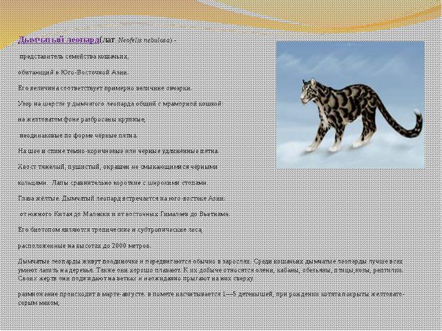 Дымчатый леопард(лат.Neofelis nebulosa)- представитель семействакошачьих,...