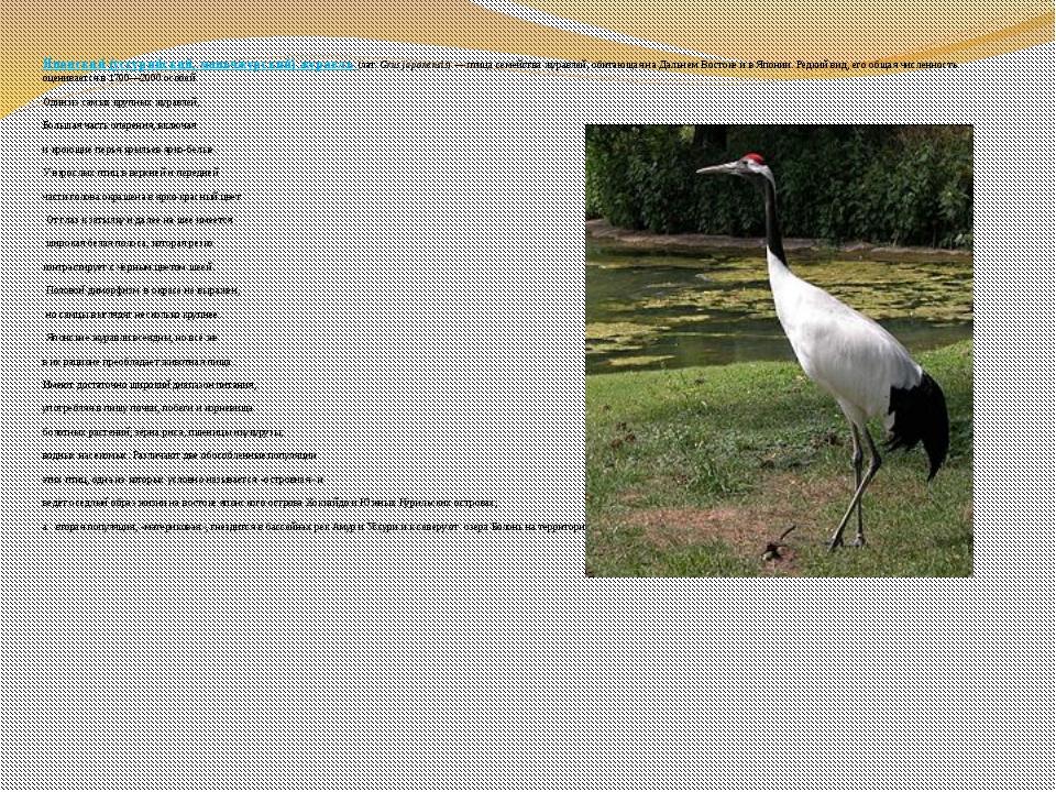 Японский (уссурийский, маньчжурский) журавль (лат.Grus japonensis)— птица...