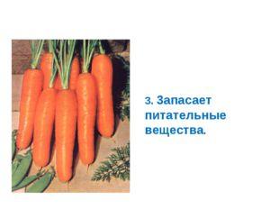 Корнеплоды - видоизмененные корни 3. 3апасает питательные вещества.
