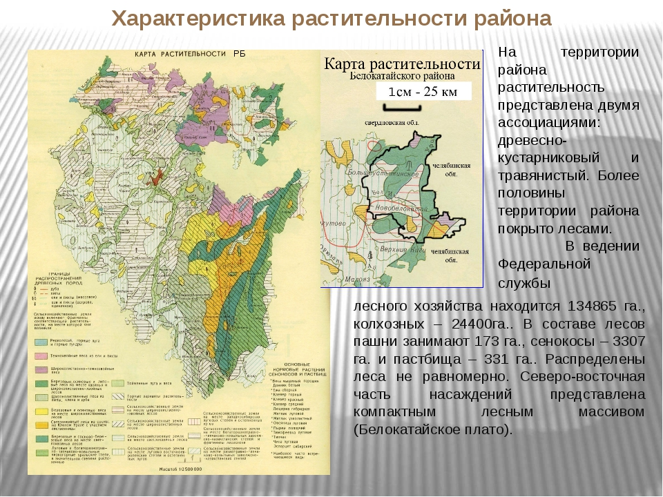 РБ На территории района растительность представлена двумя ассоциациями: древе...