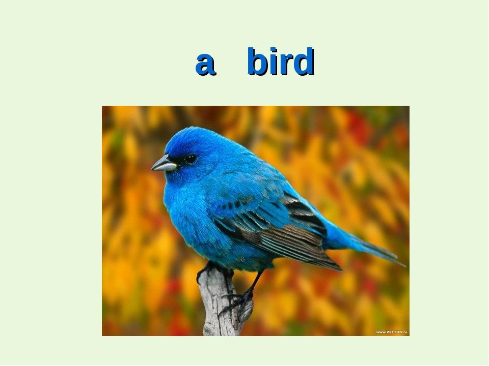 a bird