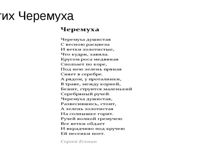 Стих Черемуха