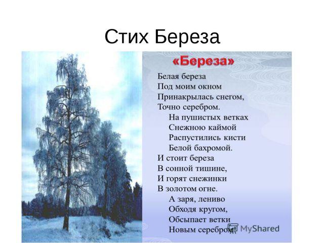 Стих Береза