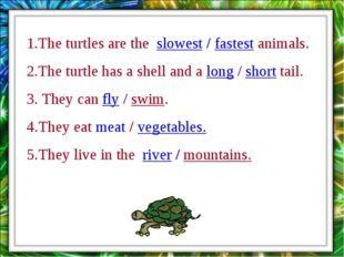 1.The turtles are the slowest / fastest animals. 2.The turtle has a shell and