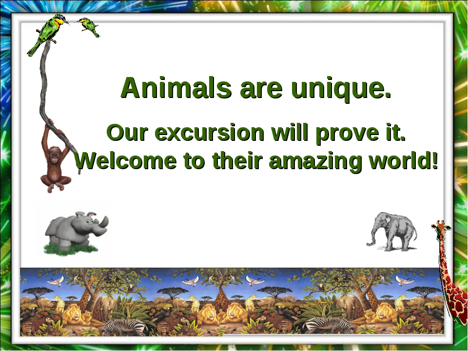 Animals are unique. Our excursion will prove it. Welcome to their amazing wor...