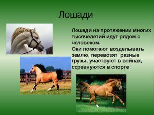 Лошади Лошади на протяжении многих тысячелетий идут рядом с человеком. Они по