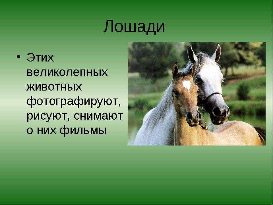 Лошади Этих великолепных животных фотографируют, рисуют, снимают о них фильмы