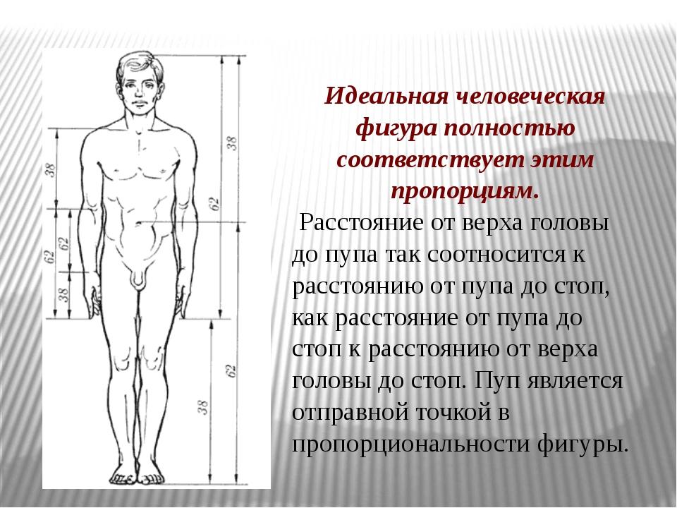 Идеальная человеческая фигура полностью соответствует этим пропорциям. Рассто...