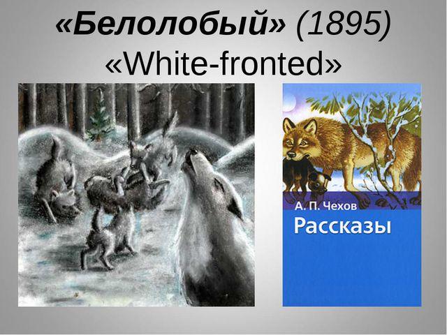 «Белолобый» (1895) «White-fronted»