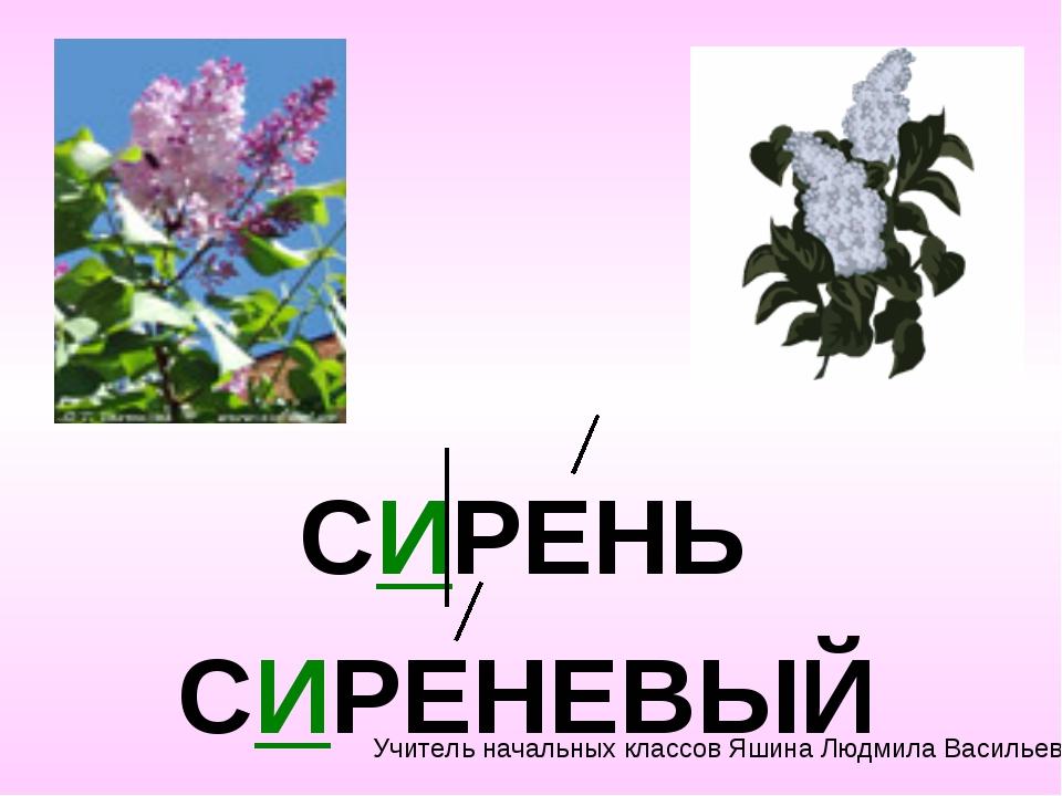 СИРЕНЬ СИРЕНЕВЫЙ Учитель начальных классов Яшина Людмила Васильевна