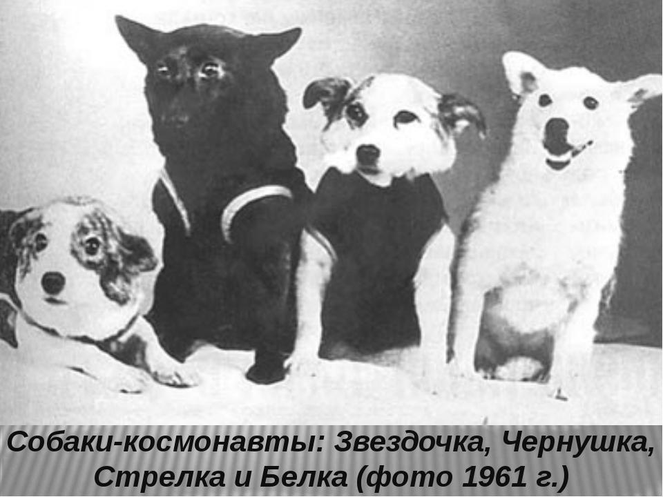 Собаки-космонавты: Звездочка, Чернушка, Стрелка и Белка (фото 1961 г.)