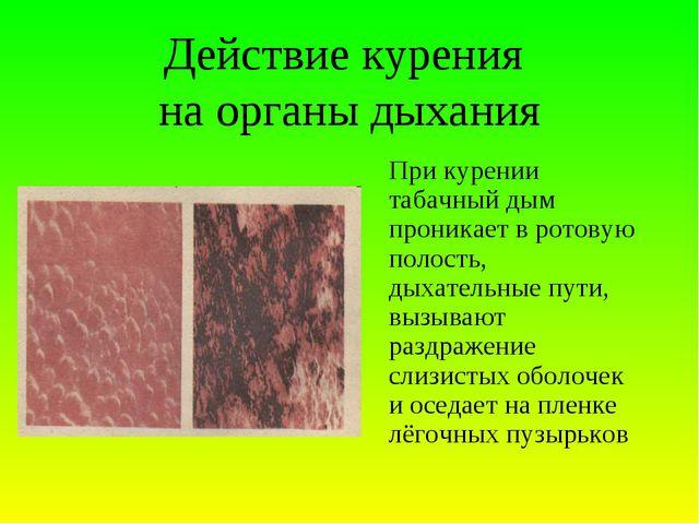 Действие курения на органы дыхания При курении табачный дым проникает в рото...