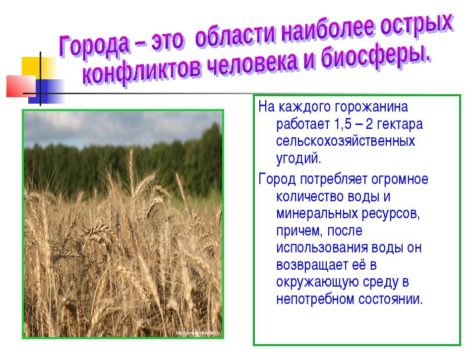 На каждого горожанина работает 1,5 – 2 гектара сельскохозяйственных угодий. Г...