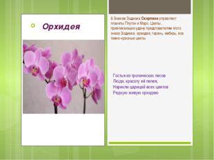 Орхидея Гостья из тропических лесов Люди, красоту её лелея, Нарекли царицей