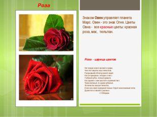 Роза - царица цветов Нет в мире ничего нежней и краше, Чем этот сверток алых