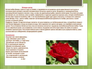 Легенда о розах Богиня любви Венера, гуляя по саду на Олимпе, в задумчивости