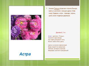Драчёва Е, 7 кл. Астра - цветочек «Тельца», Осеннего сада звезда. Как память