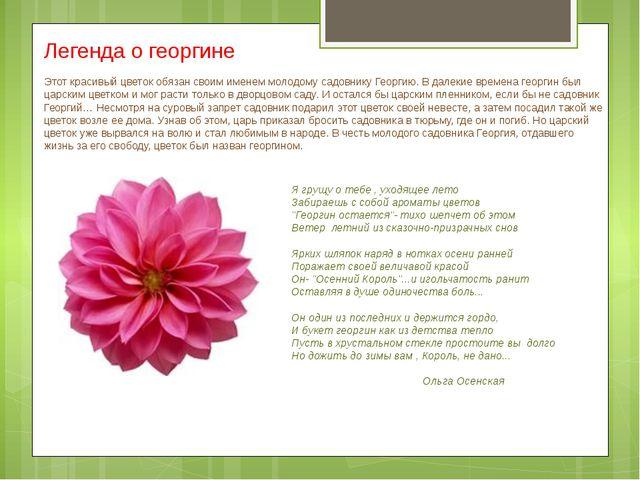 Легенда о георгине Этот красивый цветок обязан своим именем молодому садовник...