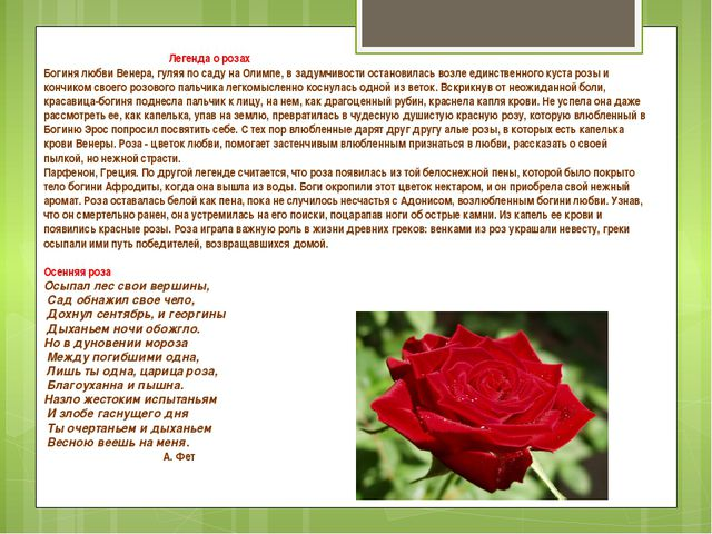 Легенда о розах Богиня любви Венера, гуляя по саду на Олимпе, в задумчивости...