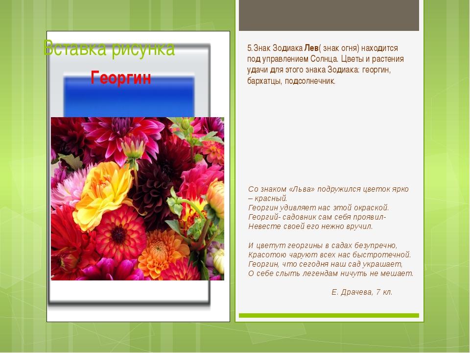 Со знаком «Льва» подружился цветок ярко – красный. Георгин удивляет нас этой...
