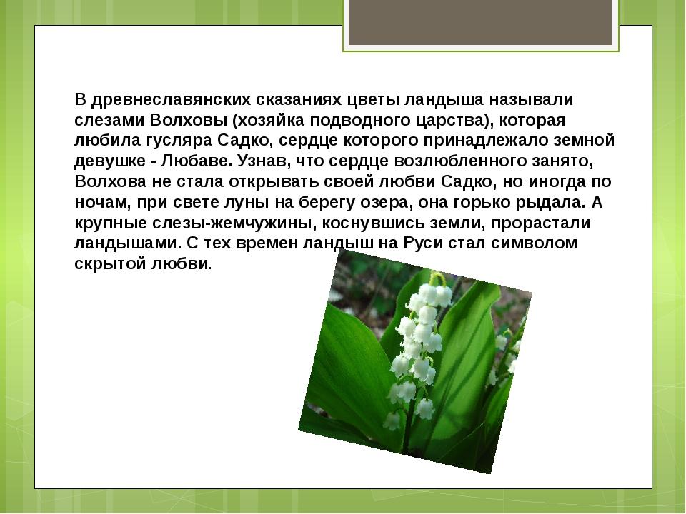 В древнеславянских сказаниях цветы ландыша называли слезами Волховы (хозяйка...