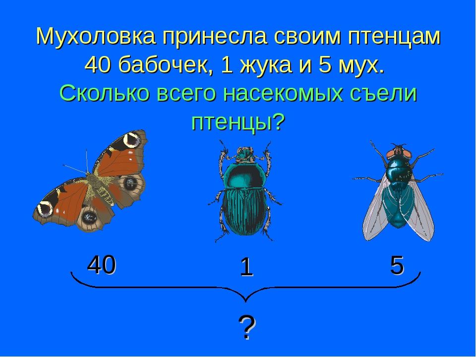 Мухоловка принесла своим птенцам 40 бабочек, 1 жука и 5 мух. Сколько всего на...