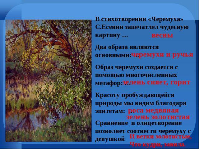 В стихотворении «Черемуха» С.Есенин запечатлел чудесную картину … Два образа...