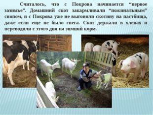 """Считалось, что с Покрова начинается """"первое зазимье"""". Домашний скот закармли"""