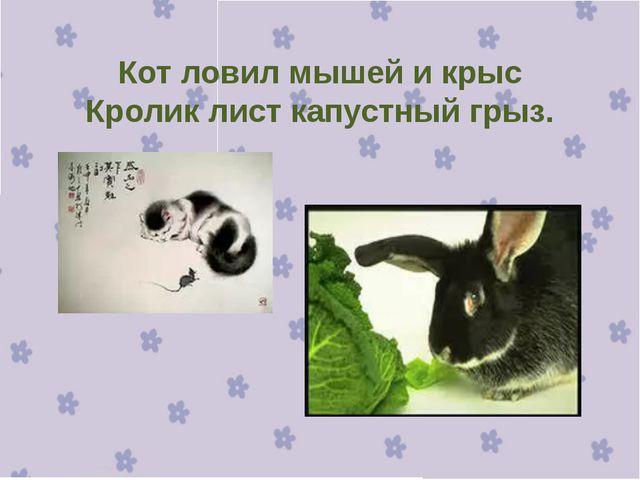 Кот ловил мышей и крыс Кролик лист капустный грыз.