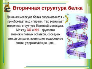 Вторичная структура белка  Длинная молекула белка сворачивается и приобретае