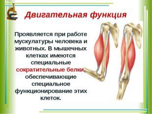 Двигательная функция Проявляется при работе мускулатуры человека и животных.