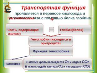 Транспортная функция проявляется в переносe кислорода и углекислого газа с по
